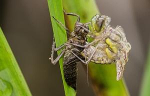 dragonfly-188275-sm