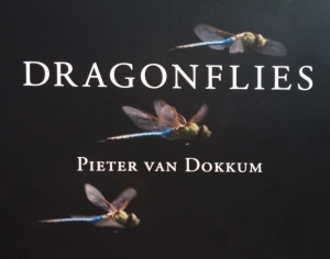Dragonflies by Peter van Dokkum