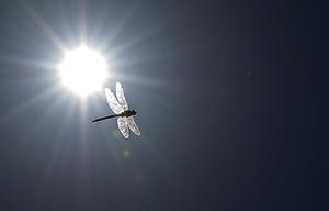 sun-403552-sm
